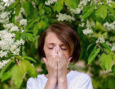 Eksperci alarmują: Alergicy nie powinni przerywać leczenia z powodu...