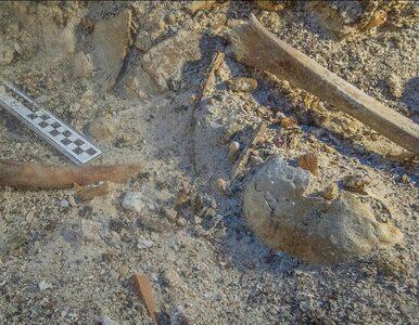 Szczątki młodego mężczyzny przez 2000 lat spoczywały na dnie morza. Czy...