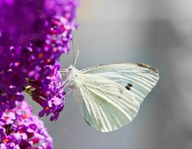 Polacy odkryli nowe gatunki motyli i żab