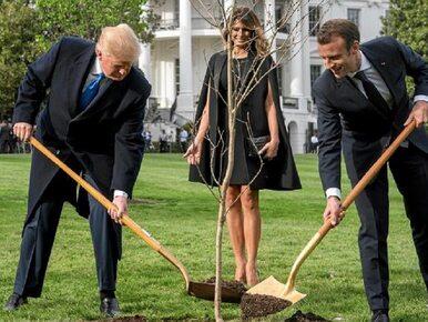 Macron i Trump wspólnie zasadzili drzewo. Internauci nie kryją rozbawienia