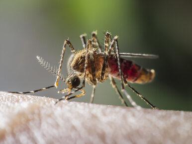 Wirus Zachodniego Nilu zabija w Grecji. Przenoszą go komary