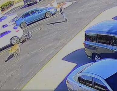 """Jeleń """"znokautował"""" mężczyznę. Incydent nagrały kamery przed McDonald's"""