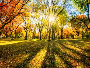 W niedzielę 23 września zacznie się astronomiczna jesień