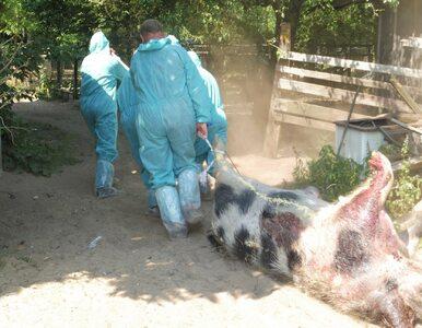 Strzelali do zwierząt z mini zoo pod pretekstem walki z ASF