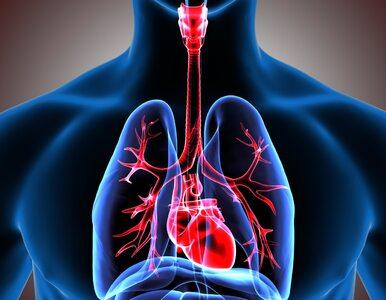 Specjalny plaster zregeneruje serce po zawale