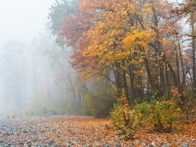 IMGW: Uwaga na gęstą mgłę! Ostrzeżenia dla czterech województw