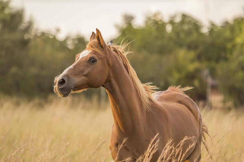 Koń, zdj. ilustracyjne