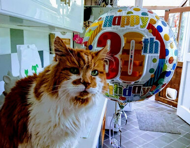 """Nie żyje """"najstarszy kot na świecie"""". """"Poszedł drogą, jak zwykł to robić..."""