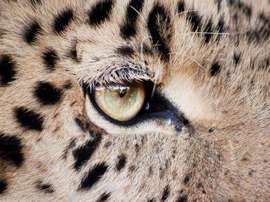 Tysiące gatunków zwierząt wyginą?