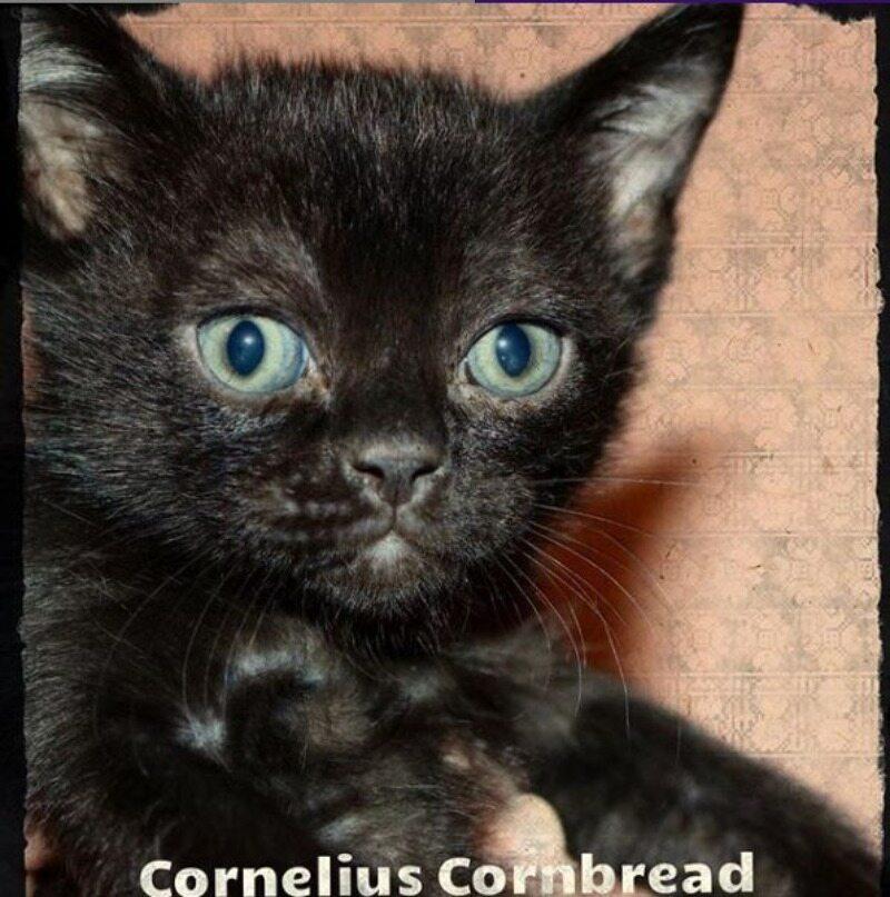 Kot Cornelius Cornbread