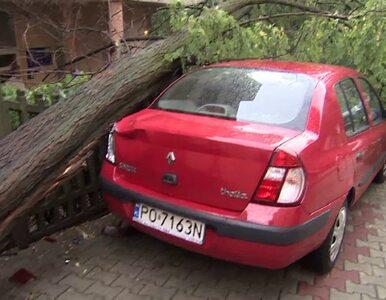 Nawałnica w Poznaniu. Powalone drzewa, zalane ulice
