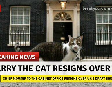 #BrexitChaos. Memy podsumowują sytuację w Wielkiej Brytanii