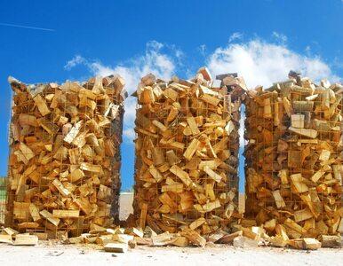 W Polsce powstanie megaplantacja drzew energetycznych