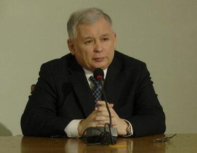Kociak prezesa Kaczyńskiego