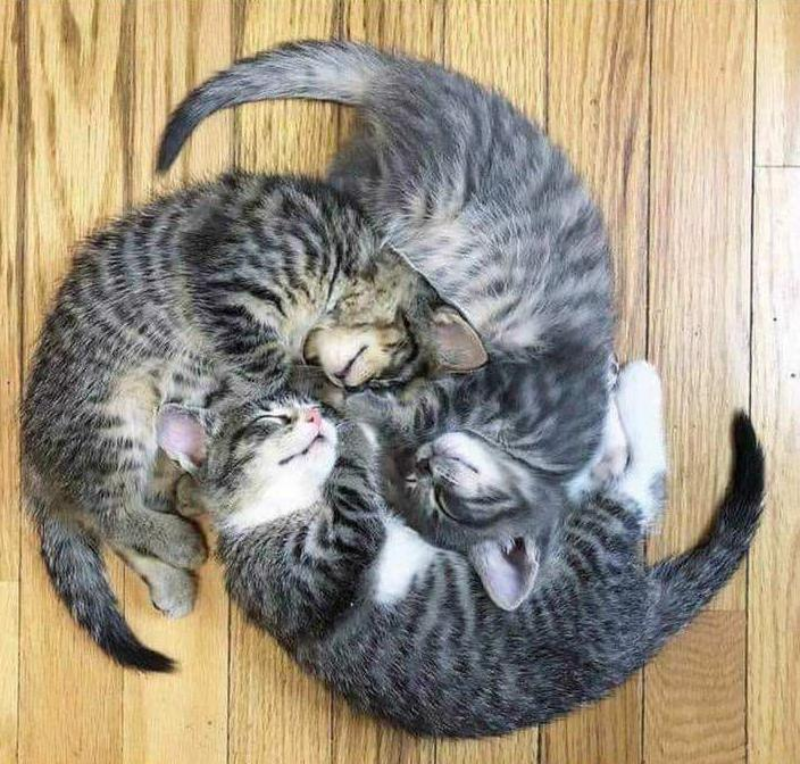 Koty, które śpią w nietypowej pozycji