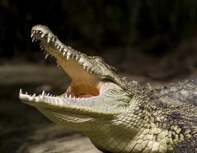 Tragedia podczas chrztu w jeziorze. Krokodyl zabił pastora
