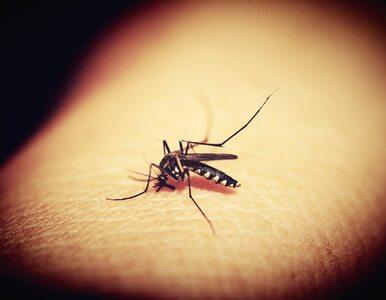 Co wiesz o komarach? QUIZ wiedzy