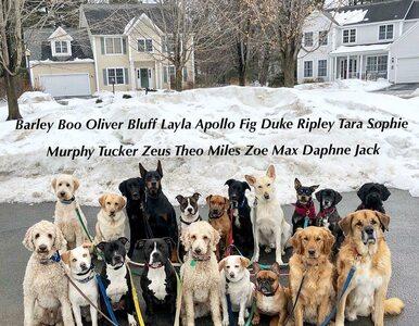 Kilkanaście psów na jednym spacerze? Musicie to zobaczyć