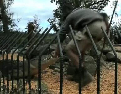 Krokodyl ugryzł opiekuna w zoo