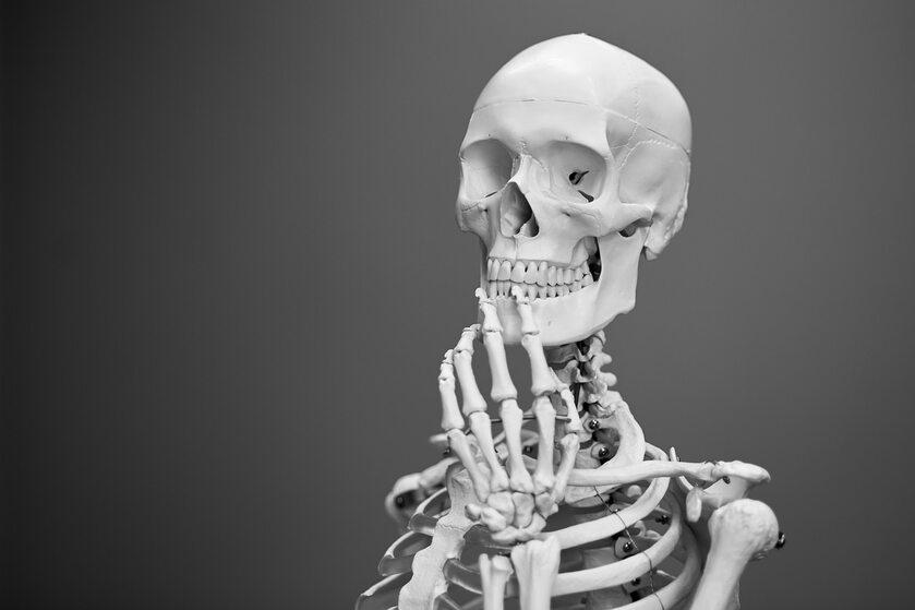 Szkielet człowieka
