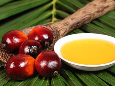 Olej palmowy zagraża orangutanom i słoniom. Może też powodować choroby u...