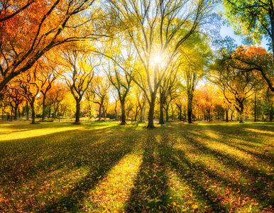 W poniedziałek początek jesieni. Czekają nas ciekawe zjawiska astronomiczne